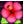 :flower: