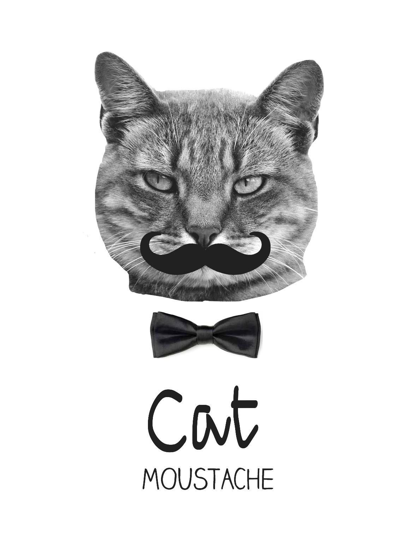 Chat moustache crecre - Dessin de moustache ...
